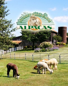 Sunset Hills Farm Alpacas