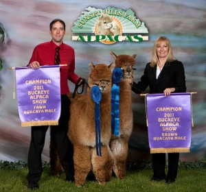 Finest Alpaca Sales