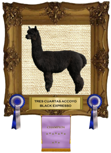 Expresso framed with awards copy
