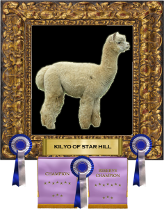 Kilyo framed w awards 2