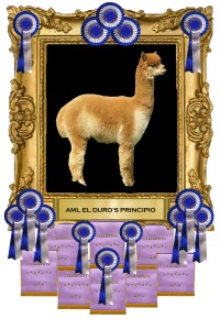 Principio frame w awardsNEW